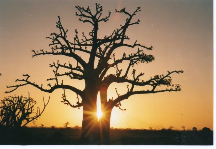 Baobab-au-coucher-de-soleil