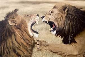 dos leones peleando